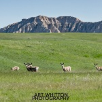 Photographing-Badlands-National-Park_32