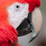 parrot-head-art-whitton-2