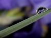 Iris-Reflection-001