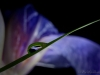 Iris-Reflection-019