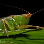 Grasshopper 002