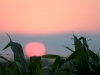 sunset-and-corn-leaves