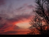 sunset-with-tree-branches24x36