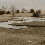 Spring Creek with Geese