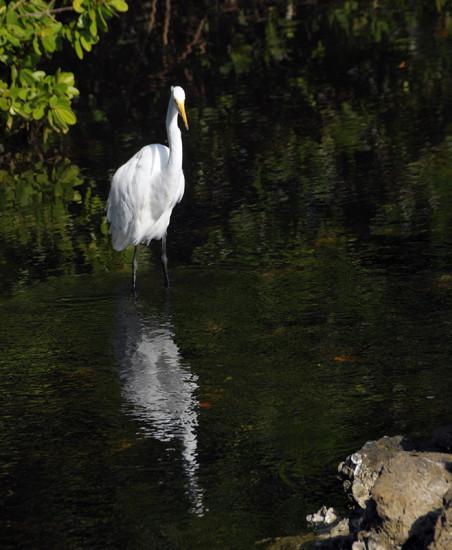 Slightly better Egret