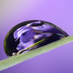 water drop reflections photography by art whitton