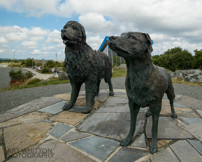 Newfoundland and Labrador dog statues Signal Hill