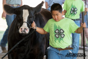 County Fair Photography - 4H Beef Show