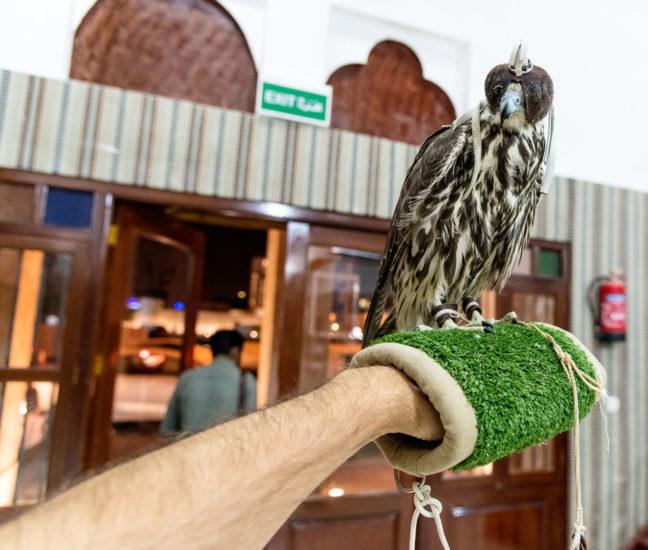 falcon souq doha qatar