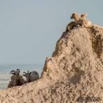 Photographing-Badlands-National-Park_01