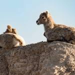 Photographing-Badlands-National-Park_03