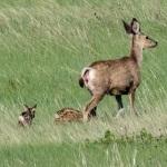 Photographing-Badlands-National-Park_27