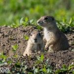 Photographing-Badlands-National-Park_29
