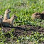 Photographing-Badlands-National-Park_30