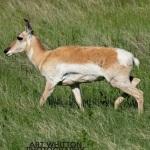 Photographing-Badlands-National-Park_33