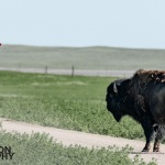 Photographing-Badlands-National-Park_36