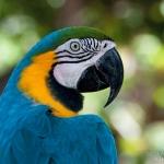 parrot-head-art-whitton