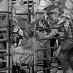 the-county-fair-mutton-busting-2