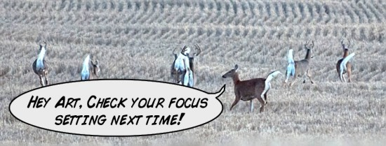 deer heckling