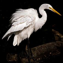 bird-photography-by-art-whitton