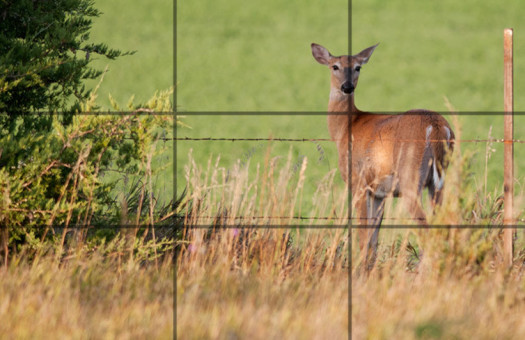Photo Composition - sample 14 - Rule of Thirds