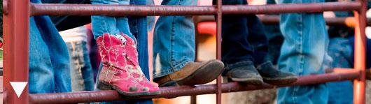 county fair photography