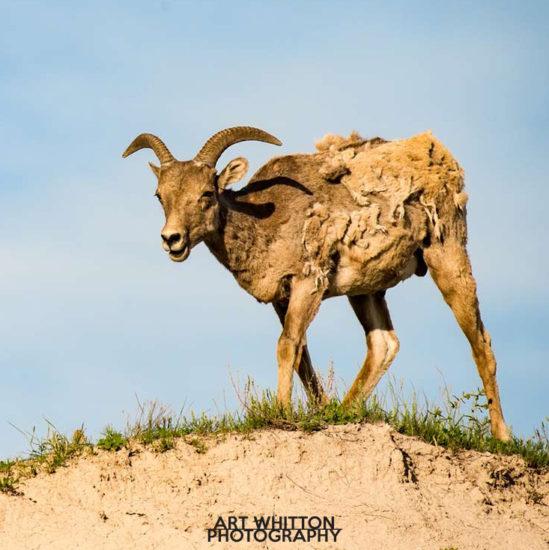 Photographing Badlands National Park 05